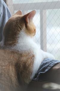 猫の仕事 - ぎんネコ☆はうす