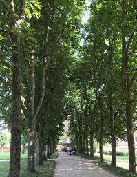 楽しく聴いて心が軽くなる、日本のラジオ番組 - ドイツの森の散歩道