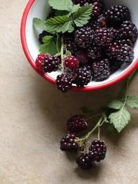 Boisenberry & Rhubarb Cobbler - Baking Daily@TM5