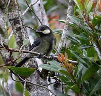 石垣島遠征(その13)・・・ - 一期一会の野鳥たち