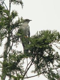 高原の鳥達 - たった一度の出会いから
