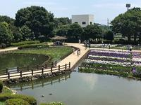水無月園の花菖蒲 - つれづれ日記