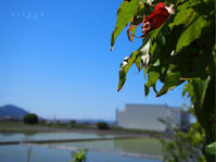 水が張られた田んぼ。 - Photo*Today & Then
