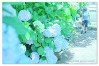 明るいブルーで。 - Yuruyuru Photograph