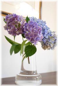 リビングに紫陽花を - Less is more
