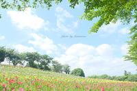 可睡ゆりの園(静岡県袋井市) - Photographie de la couleur
