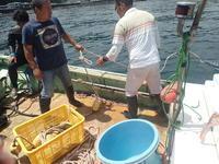 ビーチにボートに - 海洋速報  ~川奈日和~