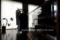 """Regular holiday's SHOP ◆ The Spiral...6/19tue"" - SHOP ◆ The Spiralという館~カフェとインポート雑貨のある次世代型セレクトショップ~"