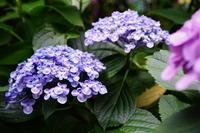 長谷寺 - 花の香りに包まれて