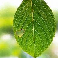 ハートの葉っぱ - 風にしっぽが揺れるから -fuwari-