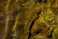 林道沿の渓のイワナ - 森と水の記憶