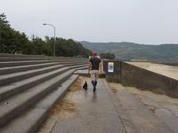 海から山へ帰って小梅をとった詩6月19日(火)雨 - トチノキの詩2