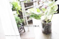 「ポトス」で 土なしガーデニング「ハイドロカルチャーの植替えの方法」 - a piece of dream* 植物とDIYと。