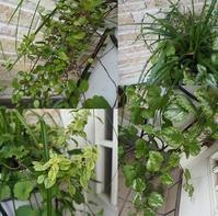 6月の寄せ植え Vol.1 - グリママの花日記