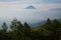 甘利山のレンゲツツジ 2 - 日本あちこち撮り歩記