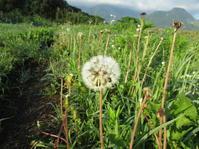夏野菜 唐辛子、キュウリ、ツルムラサキ - 南阿蘇 手づくり農園 菜の風