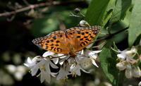 2018県内遠征 - 紀州里山の蝶たち