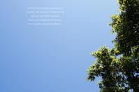 インゲン豆の収穫に。 - 木曜茶会と日々の香草・薬草ノート