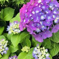 梅雨らしいお天気になりました! - 坂本これくしょん 公式ブログ | SAKAMOTO COLLECTION BLOG