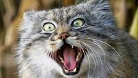 野獣との生活 - 目から鱗ンタクトレンズ
