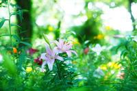 ゆり園 - jumhina biyori*