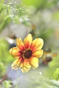 優しい時間 - お花びより