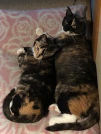 家族写真 - 愛犬家の猫日記
