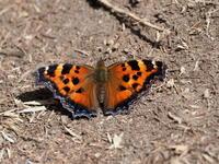 奥日光で自然観察 - コーヒー党の野鳥と自然 パート2