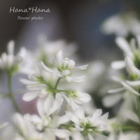 *ユーフォルビア* - HANA*HANA