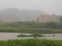 大雨 - 名張川鮎情報