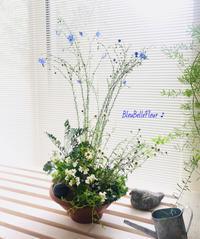 7月の寄せ植え作りのご案内♪ - Bleu Belle Fleur☆ブルーベルフルール