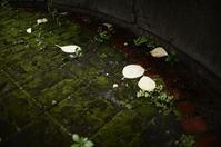 雨のクレール - 漂いながら