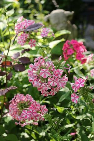 季節は初夏へと変身~ - miyorinの秘密のお庭