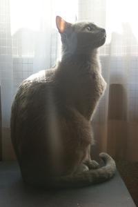 ネコに感謝を捧げる日 - ちょっとネコばか