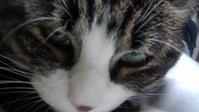 【猫】どアップ - 人生を楽しくイきましょう!