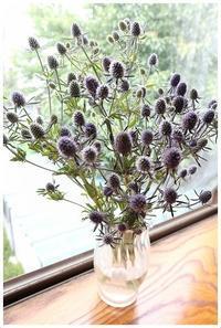家で花撮影 -  one's  heart