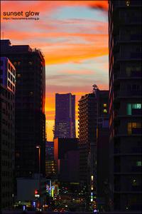 sunset glow - すずちゃんのカメラ!かめら!camera!