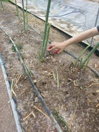 小豆島訪問6月 - 農交ネットのひび