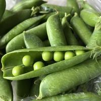 First Peas (初グリーンピース) - ファルマウスミー