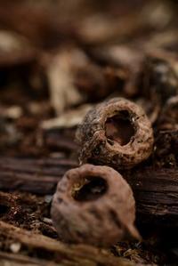アカネズミ属の食痕 - こんなものを見た2