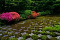 東福寺本坊庭園のサツキ - 鏡花水月