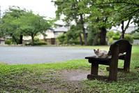 公園のノラと遊ぶ#3 end - hanako photograph