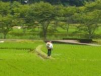 雨上がりは、農薬散布日和 - 化学物質過敏症・風のたより2