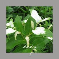 夏至 - 花伝からのメッセージ           http://www.kaden-symphony.com