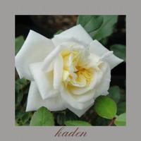 アルベリック、バルビエ - 花伝からのメッセージ           http://www.kaden-symphony.com
