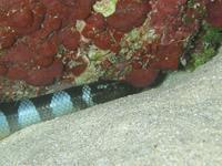 2012.07 奄美 The 2nd day The 3rd Dive - ランゲルハンス島の海