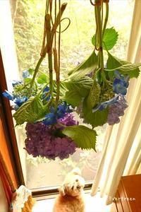 みかんと紫陽花ドライにトライ。 - Evergreen. ~常磐に唐草、庭の花~