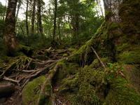 梅雨の苔の森 - tokoya3@