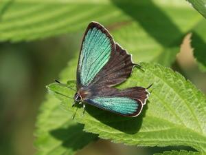 2018年春の探蝶活動 - 蝶鳥ウォッチング