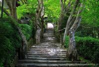 京都大原寂光院 - 暮らしを紡ぐ